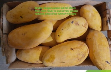 HM Update # 18 Mango Season ending special offer of Mango Free Home Delivery